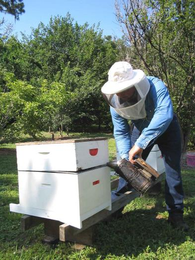Publicadas las ayudas para mejorar la producción y comercialización de los productos de la apicultura