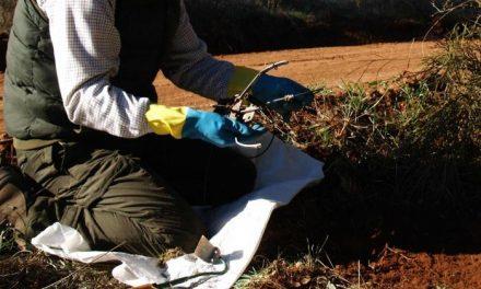 La Junta autorizará acciones de control de daños de jabalí y conejo durante el Estado de Alarma
