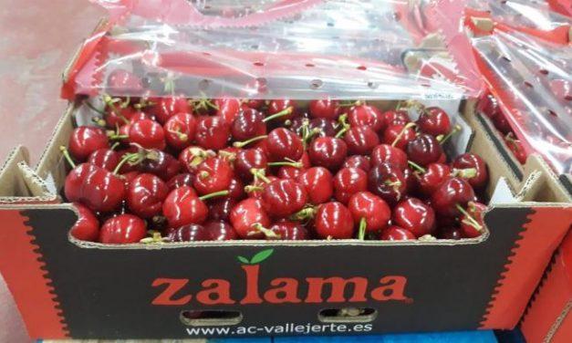 """Mirada en el Jerte: Comienza la campaña de recogida de cerezas con """"buenas expectativas"""""""
