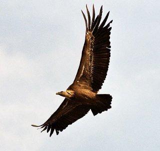 La Comunidad Autónoma Extremeña, como destino de turismo ornitológico, se promociona en Holanda