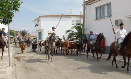 Las Fiestas de San Ramón que se festejan del 23 al 31 de agosto en Casillas de Coria celebran el primer encierro