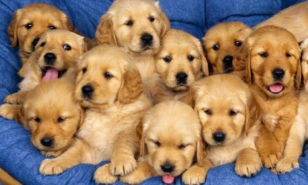 La asociación pro refugio canino establece que los perros adoptados deberán llevar microchip