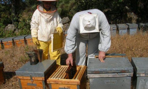 Apihurdes prevé una reducción de la produccion de polen en la presente campaña próxima al 30%