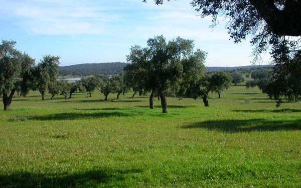 La Junta asegura que los propietarios de terrenos de Cornalvo y la Junta Rectora piden el plan de gestión