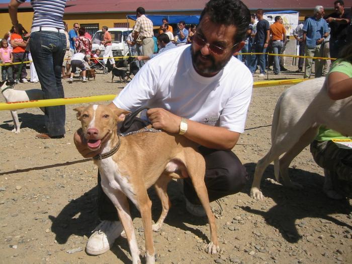 Ahigal espera reunir a 2.000 perros en la novena Feria Nacional de Perros que se celebrará este domingo