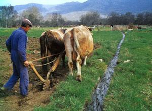 Las fuertes lluvias de ayer causan daños cuantiosos en las cosechas de arroz y maíz de Don Benito