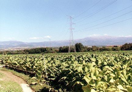 Juan Ramón Ferreira afirma en Bruselas que el sector del tabaco es irrenunciable para la región extremeña