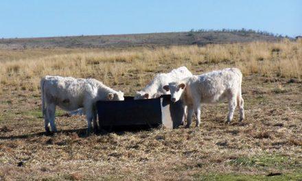 La comarca de Trasierra aspira a crear un sello de calidad para la carne de vacuno y del ovino