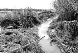 Don Benito pide a CHG que limpien los arroyos para que no se repitan las inundaciones