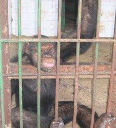 Ecologistas en Acción de Extremadura pide se aclare la situación de los animales del Zoo de Almendralejo