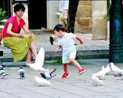 El Ayuntamiento de Mérida estudia cómo erradicar las palomas del centro urbano sin exterminarlas