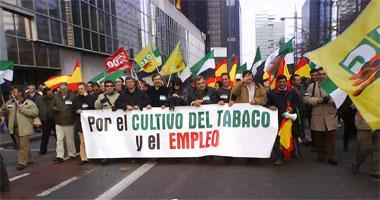 Unos 700 extremeños se manifiestan en Bruselas para pedir la continuidad de las ayudas al tabaco