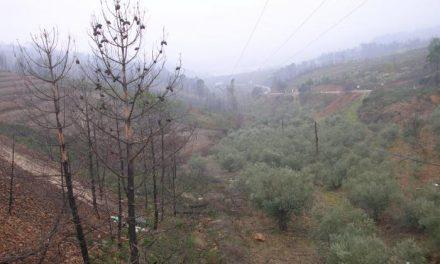 La Junta aporta 3,8 millones de euros para restaurar áreas degradadas afectadas por el fuego en Las Hurdes