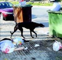 La perrera municipal de Plasencia sobrepasa el límite y tiene que desalojar a una treintena de animales