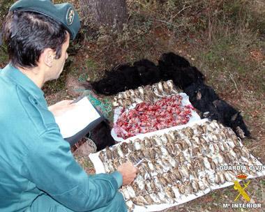 El Servicio de Protección de la Naturaleza sorprende a un vecino de Don Benito desplumando 264 gorriones