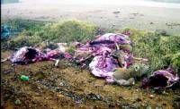 Vecinos de Almendralejo encuentran en un camino de campo de los cadáveres de tres ciervos