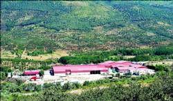 Las cooperativas del Valle del Jerte inician la campaña de venta y distribución de cerezas en Navidad