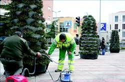 El servicio de Parques y Jardines de Badajoz repone en la plaza de San Atón los conos con plantas