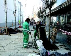La Asociación Amigos de Badajoz solicita que se retiren los árboles de Francisco Pizarro