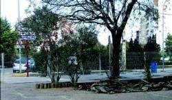 Comienzan las obras para  la sustitución del acerado en la urbanización de Las 300 en Almendralejo