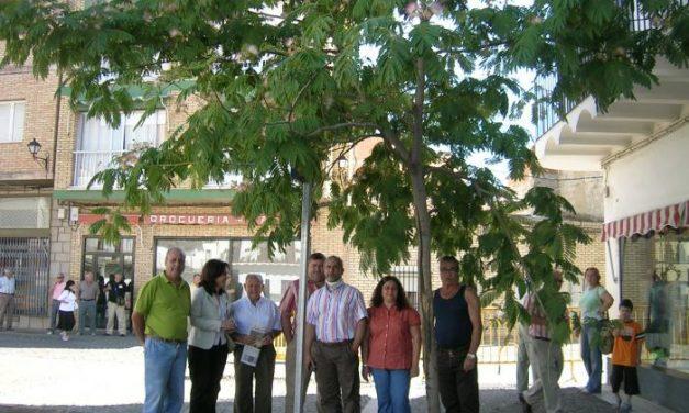 El PSOE protesta por el arranque de árboles de la plaza de los Toros