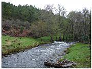 La Unión Europea obliga a destruir más de 225.000 pinos en Sierra de Gata antes del 1 de abril