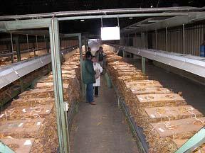 Alba Plata II recuperará un antiguo secadero de tabaco en San Gil para promocionar la Vía de la Plata