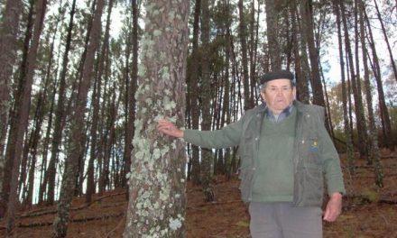 Los afectados por el gusano del pino en Sierra de Gata y el Valle del Alagón piden que se declare zona catastrófica