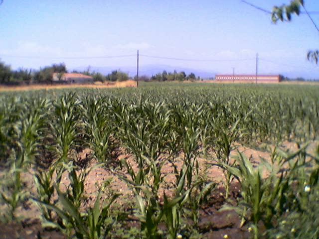 El precio de la superficie de tierra agraria sube en Extremadura un 40% menos que la media nacional