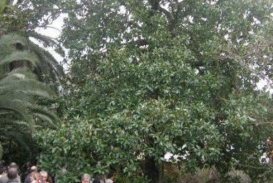 Villanueva de la Sierra homenajeará a las víctimas de violencia de género durante la Fiesta del Árbol