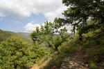 Villanueva de la Sierra acogerá una jornada sobre el papel de los árboles en el desarrollo sostenible