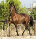 Unos 50 caballos participarán en la tercera ruta ecuestre que se celebrará por los pueblos de la Vera
