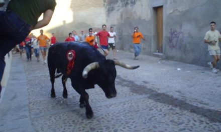 El abanderado de San Juan 2009 elige un astado de Miura para recorrer las calles de Coria la tarde del día 24