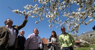 La Junta iniciará los trámites para la declaración del Cerezo en Flor Fiesta de Interés Turístico Nacional