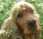 Moraleja organiza una charla informativa dedicada al mundo del perro mañana viernes 3 de abril