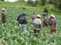Agricultores, ganaderos, técnicos y consumidores participarán en Baños en las II Jornadas Agroecológicas