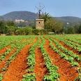 Extremadura recibe más de 16,7 millones para agricultura, ganadería, y desarrollo rural