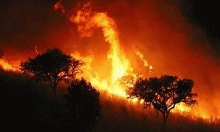 La Junta anula el peligro medio de incendios en el norte de Cáceres debido a las últimas lluvias registradas