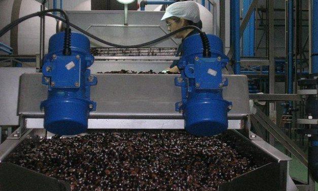 Investigadores del Intaex presentarán un estudio para paliar los efectos negativos de la industria oleícola