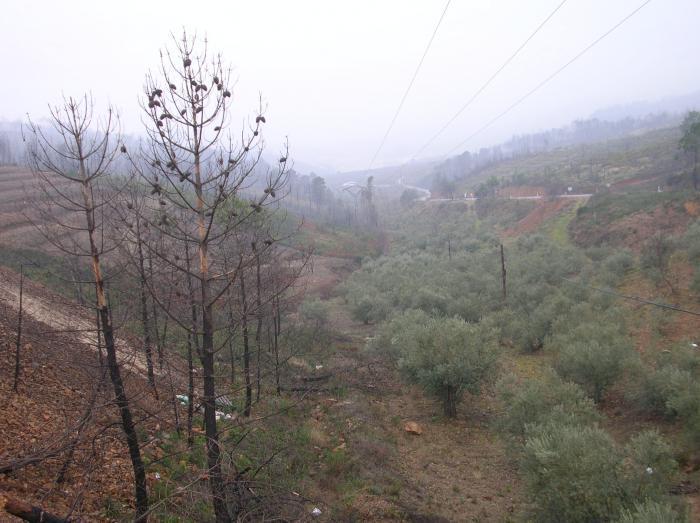La Junta invierte 2,8 millones de euros en la restauración de áreas quemadas de Las Hurdes