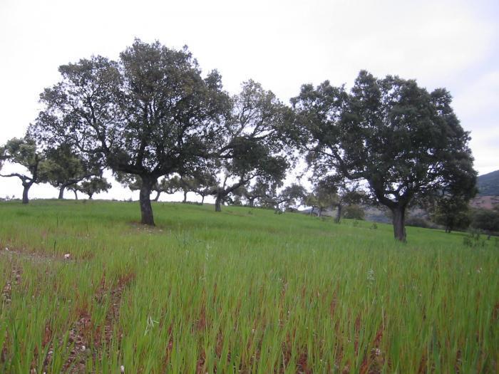 Aeefor celebrará en Mérida las 'Jornadas sobre bosques, energía y cambio climático en un contexto de crisis'