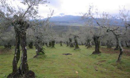 La mermelada de aceituna extremeña de una empresa de Badajoz se consume ya en EE.UU y otros países