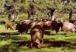 El Ministerio califica quince comarcas con baja incidencia por la enfermedad de Aujeszky en el porcino