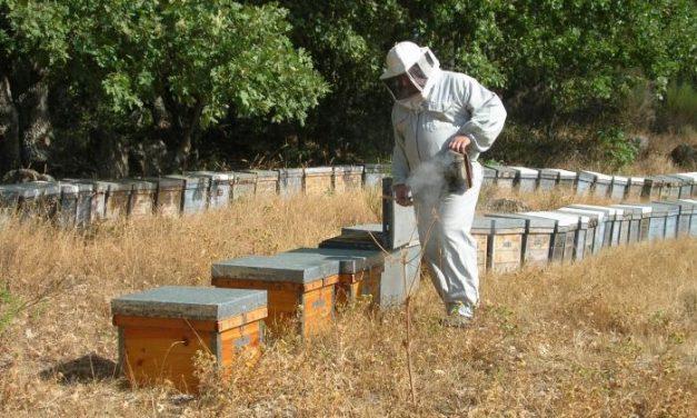 Un apicultor hurdano denuncia el robo de 42 colmenas en un pueblo de la provincia de Salamanca