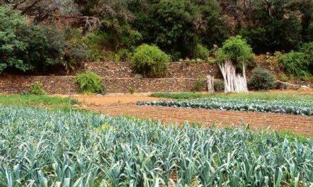 Agricultores piden que los precios no estén por debajo de los costes de producción