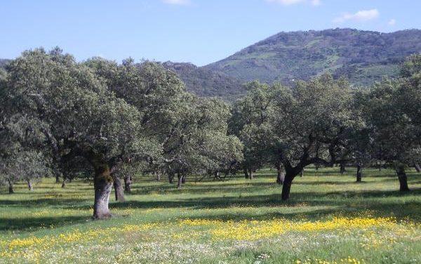 Los diputados socialistas advierten en el Congreso de que la dehesa pierde cada año 1.500 hectáreas