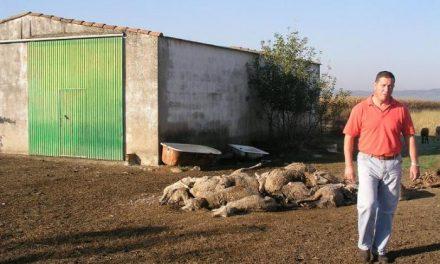 Ganaderos de Coria y comarca critican la tardanza a la hora de retirarles las ovejas muertas de sus fincas