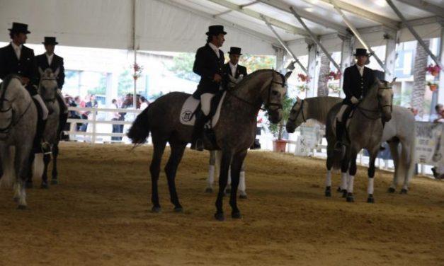 El primer club de enganches de Extremadura nace con siete ganaderías en el marco de la Feria del Caballo