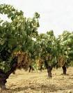 Un total de 180 patrullas de la Guardia Civil vigila campos y caminos para prevenir robos de fruta en Badajoz