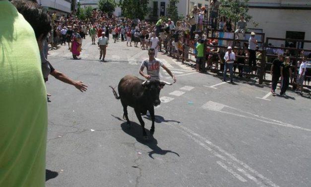 Las fiestas de San Juan comienzan este martes con el traslado de los bueyes y la lidia de la vaca de La Rana